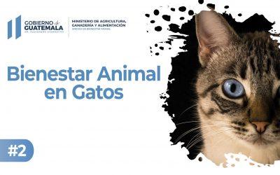 Bienestar Animal en Gatos