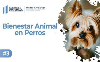 Bienestar Animal en Perros