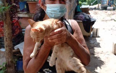 Animales atendidos por la Unidad de Bienestar Animal